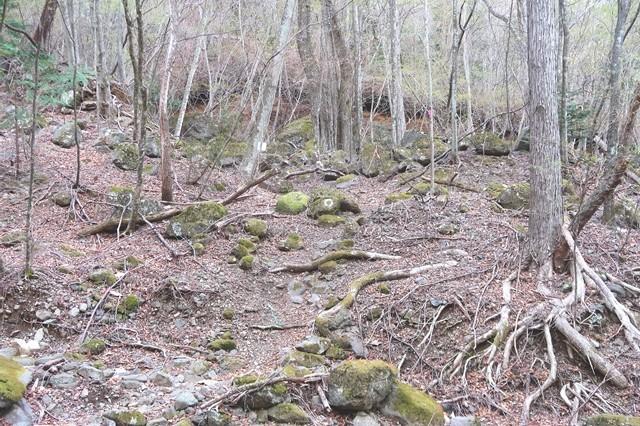 三つ峠北口登山道踏み跡やマーキング