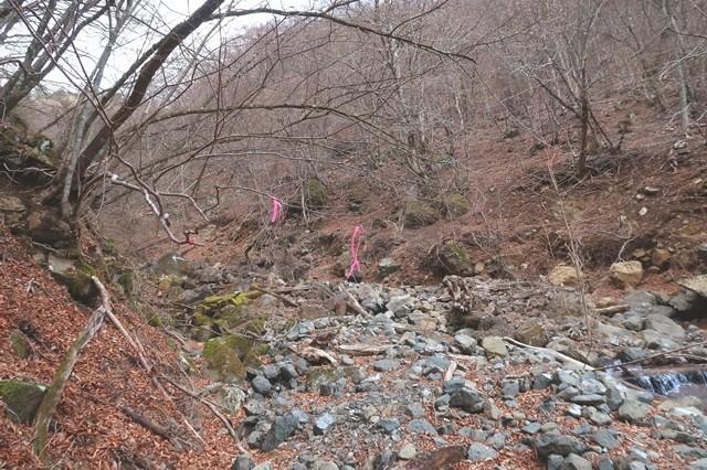 三つ峠北口登山道のピンクリボンはルートを指している