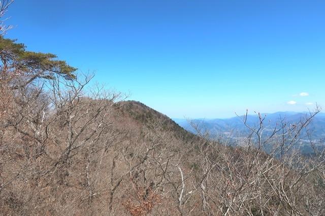 木々の間から本社ヶ丸の山頂眺め