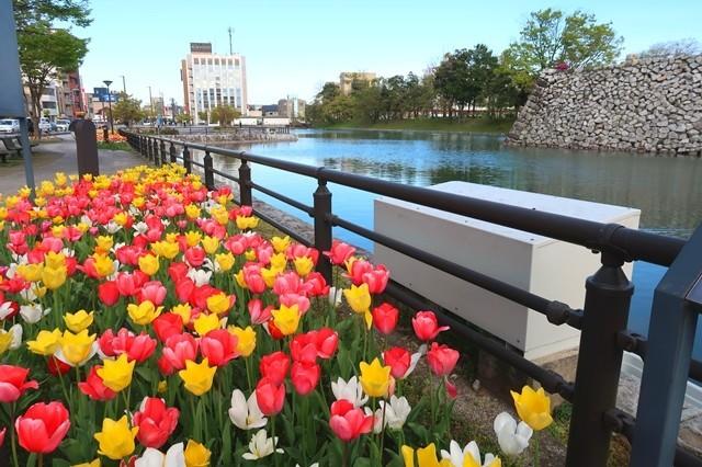 富山城のお堀の周りのお花