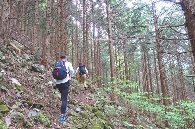 シロヤシオ咲く檜洞丸北尾根登山道の様子