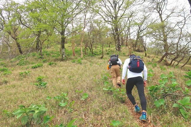 檜洞丸北尾根登山道のクライマックス部分