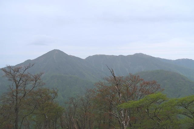 檜洞丸付近から見る蛭ヶ岳