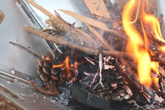 着火した松ぼっくりが小枝に燃え移った様子