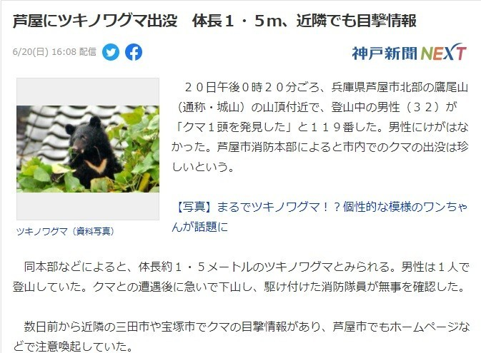 兵庫県蘆屋に熊出没ニュース