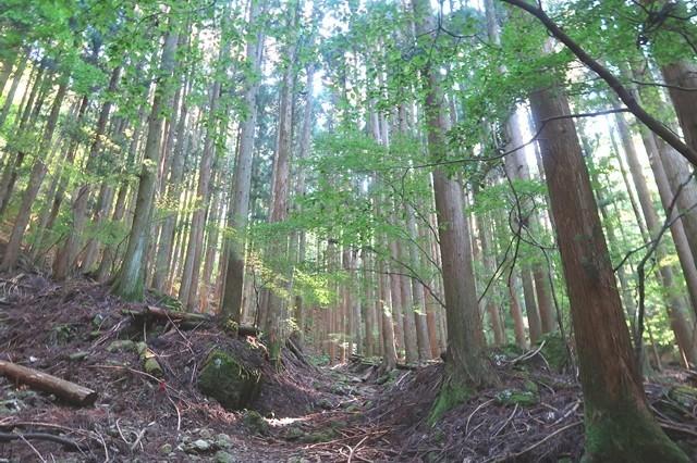 雪頭ヶ岳へのルートは樹林帯歩きの様子
