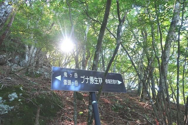 ブナ原生林の道標