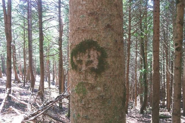 桑留尾ルートの木の模様