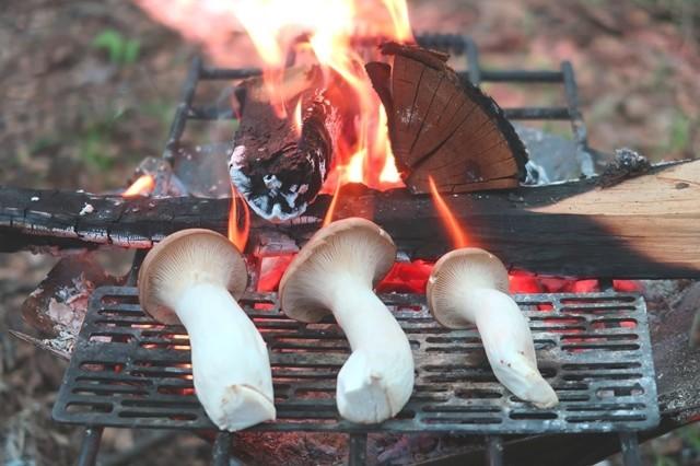 焚き火台でキノコ調理