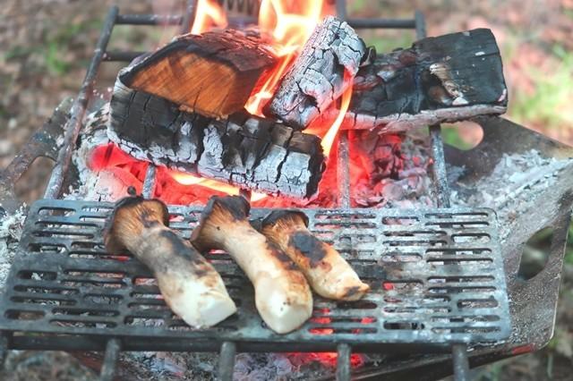 エリンギ焚火で調理完成形