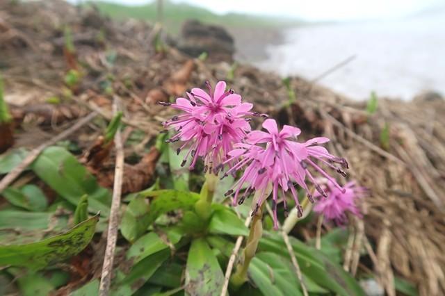 梅花皮小屋ルート上に咲いていたお花