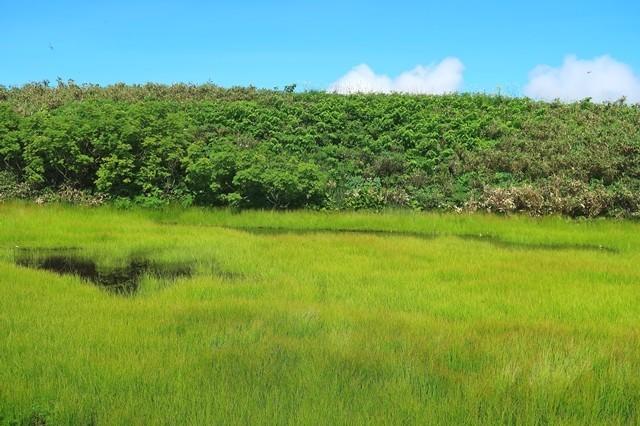 飯豊連峰の池塘