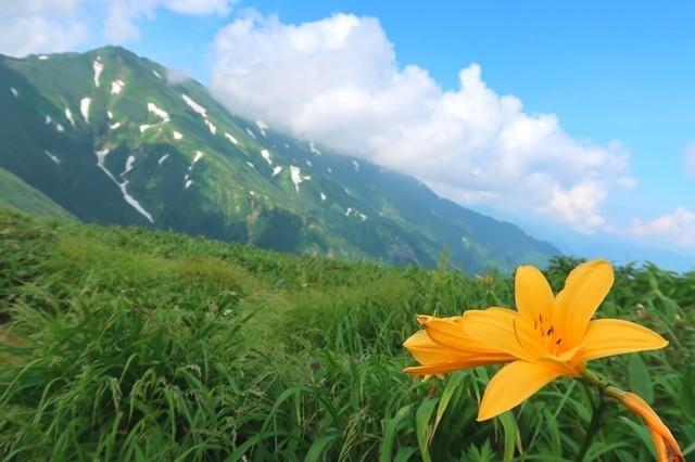 ニッコウキスゲと大日岳のコラボ写真