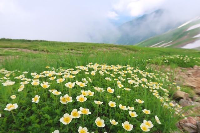 大日岳のルートに咲くお花