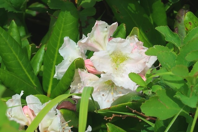大日岳の山頂までお花が多く癒される