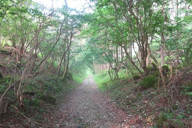 根原の吊橋林道歩き