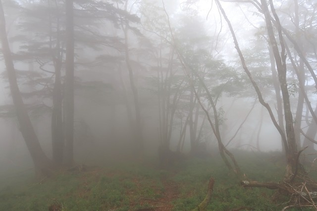 高見岳からタカデッキ縦走路の様子