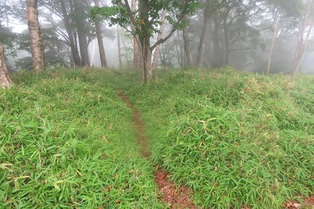 雨ヶ岳北尾根の踏み跡