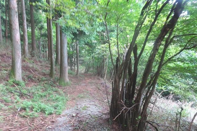 、割石峠へのルートと東海自然歩道の様子