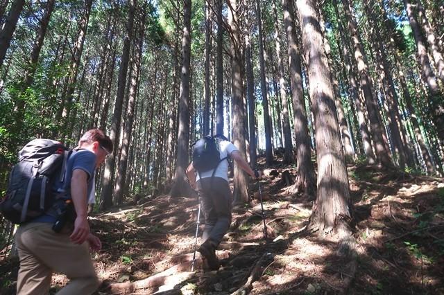 天子ヶ岳登山道の様子とルート
