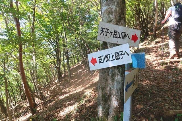 天子ヶ岳と芝川町上稲子へ至るルートの分岐