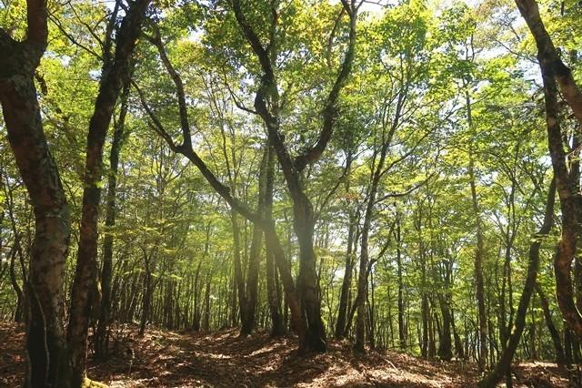 天子ヶ岳登山ルートの森の景色