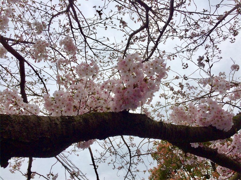 f:id:aoi-hanayama:20170402101426j:image
