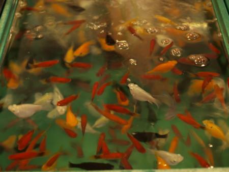 f:id:aoi-lab:20080818225505j:image