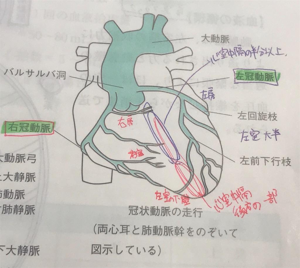 動脈 輪 は ウィリス と