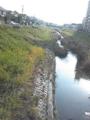 きれいな川。鯉が泳いでまする。