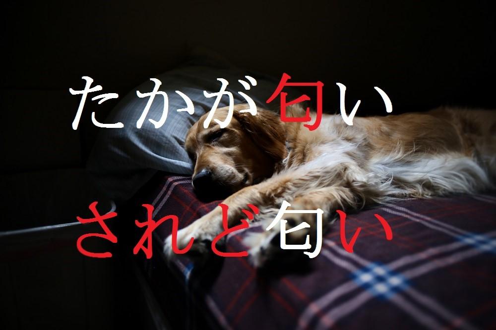 f:id:aoikara:20161021171601j:plain