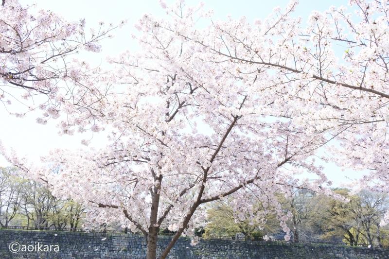 f:id:aoikara:20170503110030j:plain