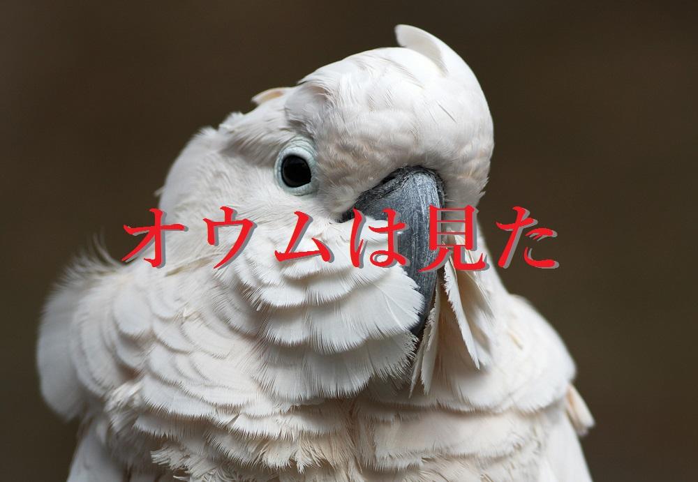 f:id:aoikara:20170505195806j:plain