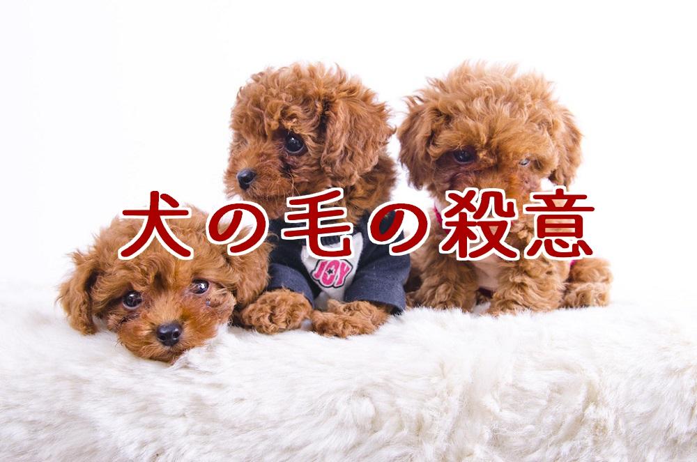f:id:aoikara:20170518172349j:plain