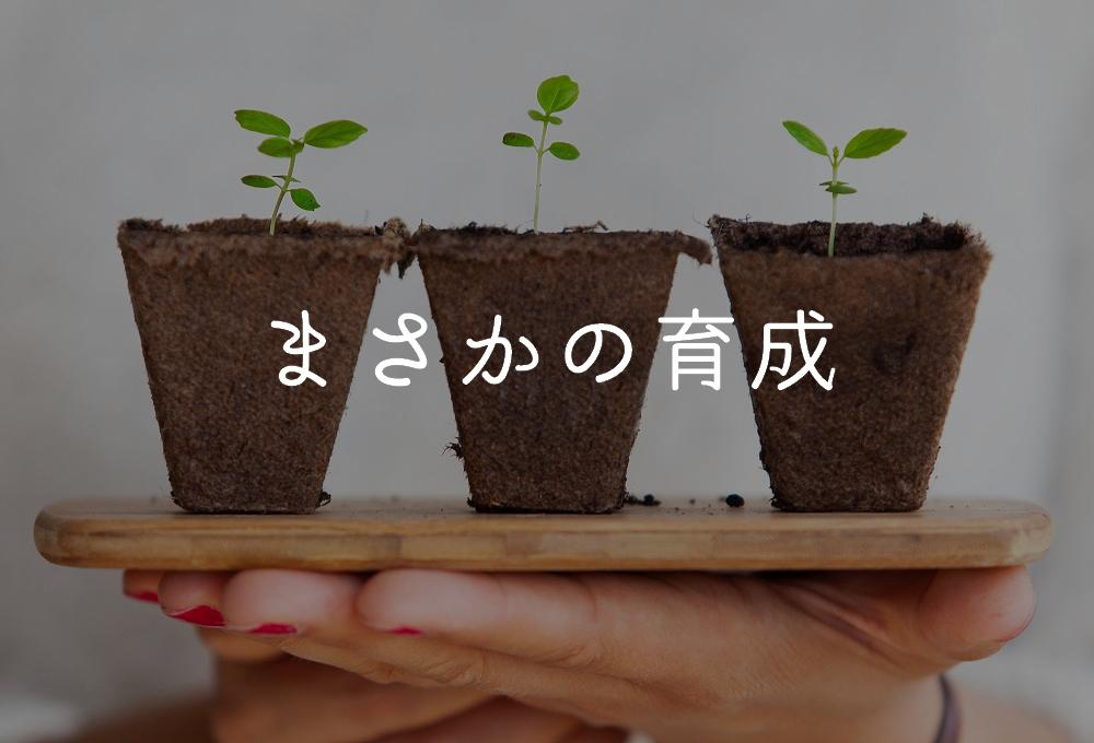 f:id:aoikara:20171104152356j:plain