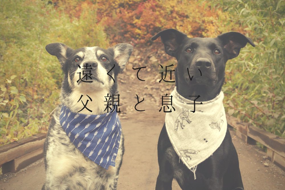 f:id:aoikara:20181027125541p:plain