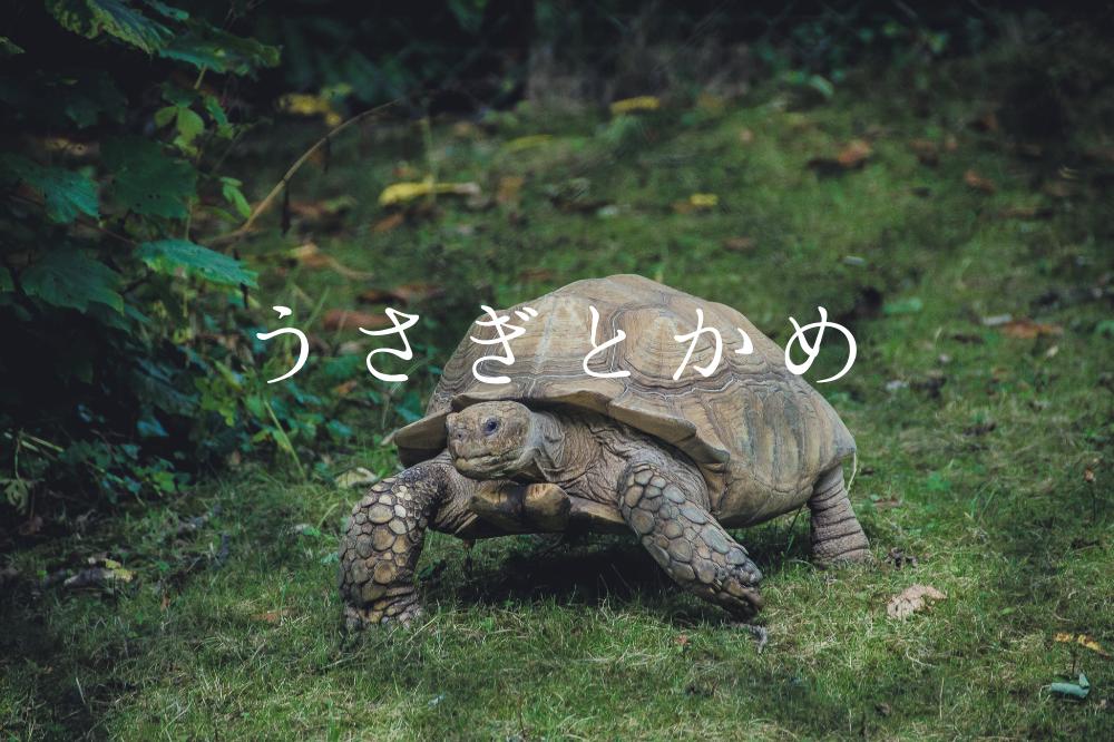 f:id:aoikara:20181129160223p:plain