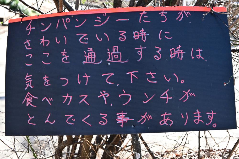 f:id:aokami:20200211102315j:plain