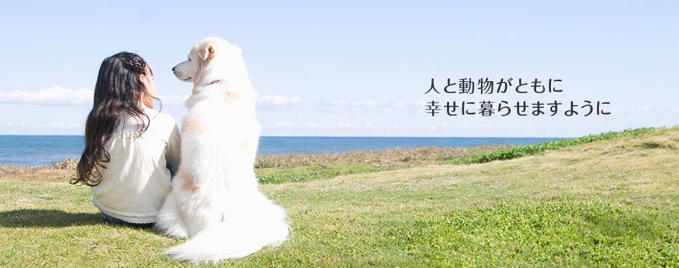 f:id:aokamo:20201101014859j:plain