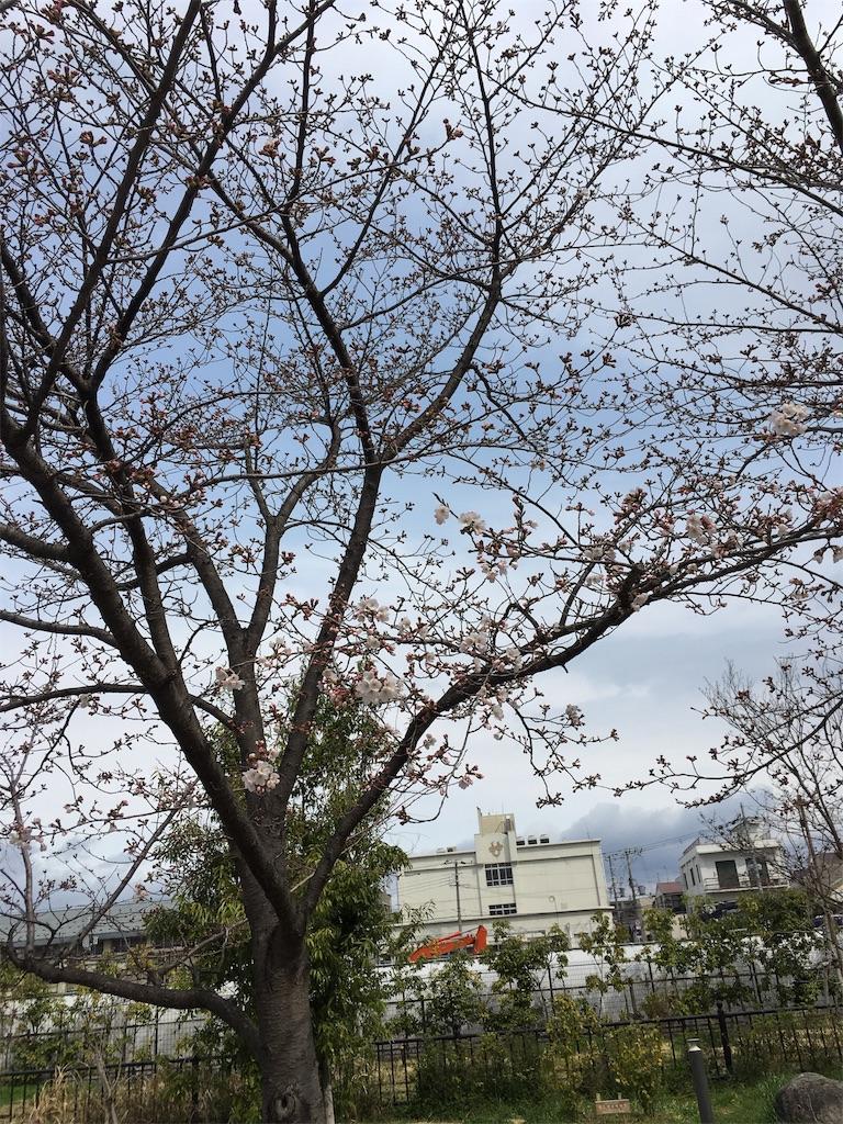 f:id:aomisayu:20190330044108j:image