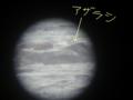 '08 襟裳岬の野生アザラシ