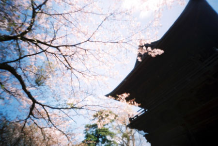 称名寺の春
