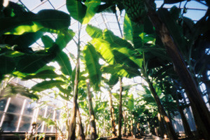 熱帯色の天蓋