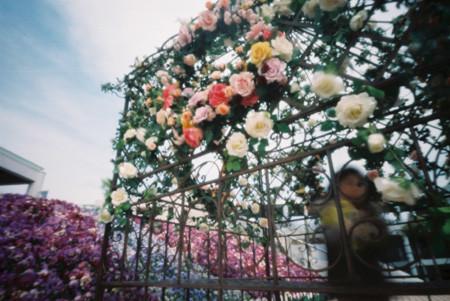 薔薇のガゼボ