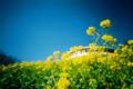 [マザー牧場]春色絨毯