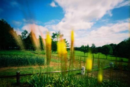 風に振れる黄色