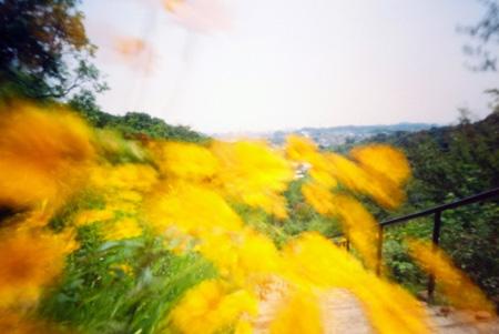 溢れそうな黄色