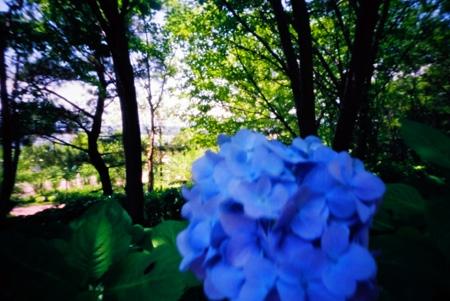 紫陽花青色