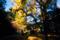 黄金色の散策路