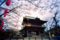 桜花の仁王門